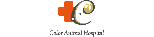 カラー動物病院 Color animal hospital